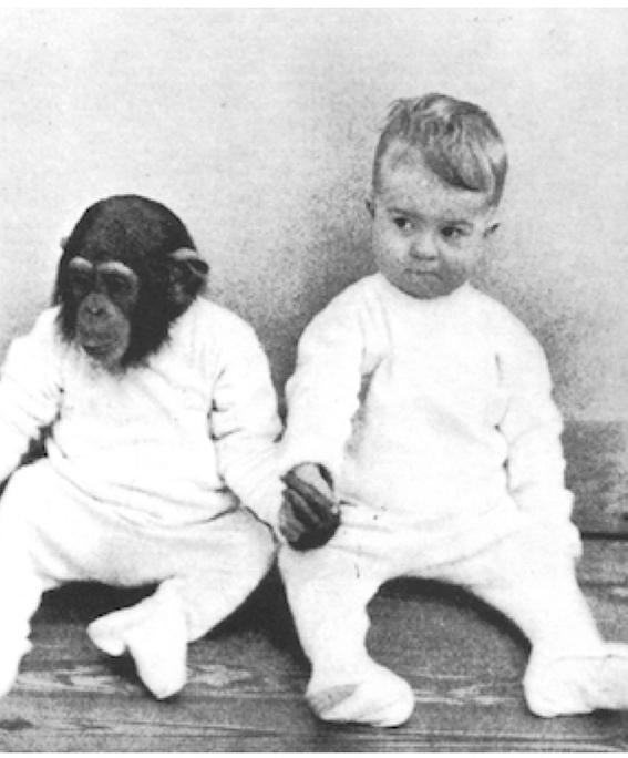 reproduccion de humanos con chimpances 2