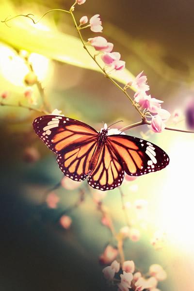 leyenda mariposas monarcas 1