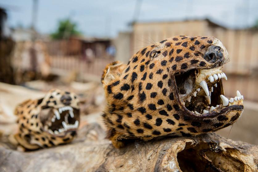 24 fotografías de sacrificios y vudú en África 19