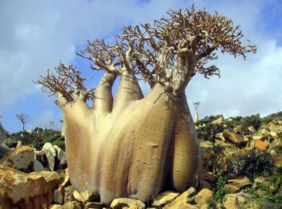 socotra isla alien 2
