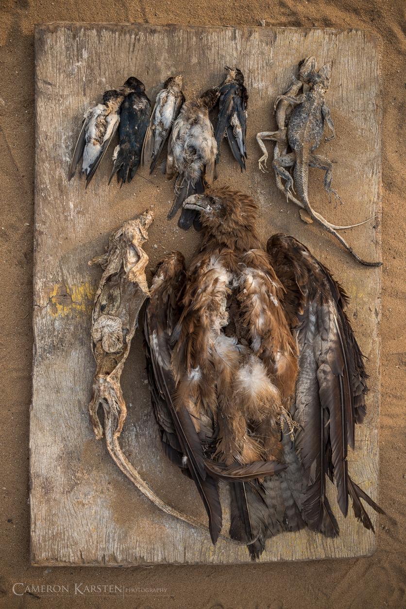 24 fotografías de sacrificios y vudú en África 7
