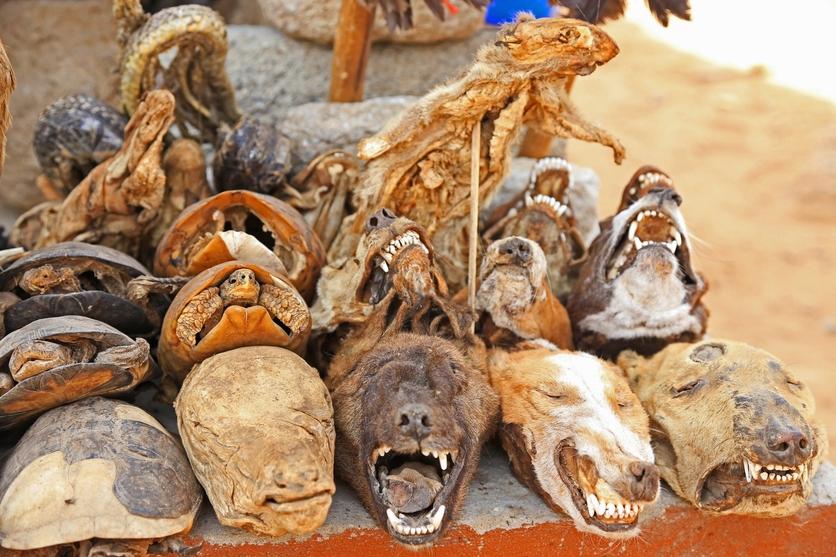 24 fotografías de sacrificios y vudú en África 16