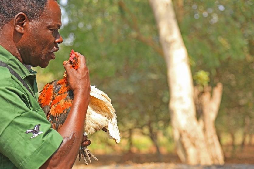 24 fotografías de sacrificios y vudú en África 21