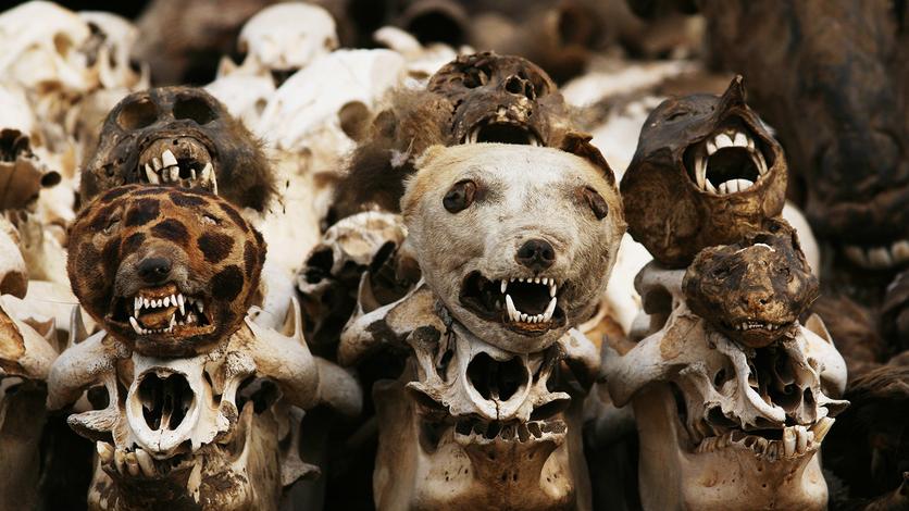24 fotografías de sacrificios y vudú en África 17