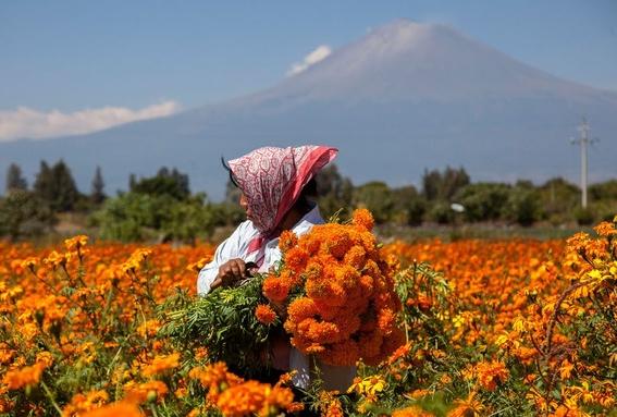 flor de cempasuchil 2