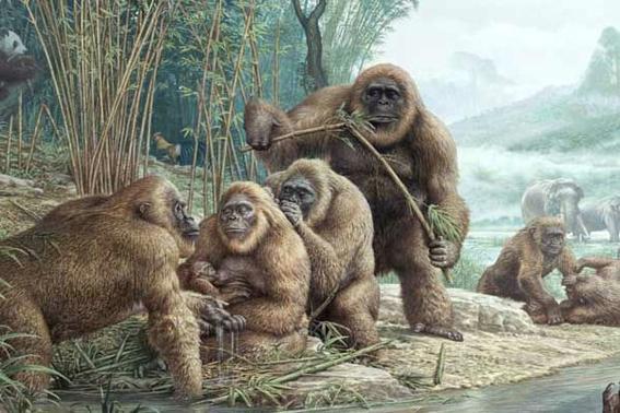 nueva raza de orangutanes en indonesia 2