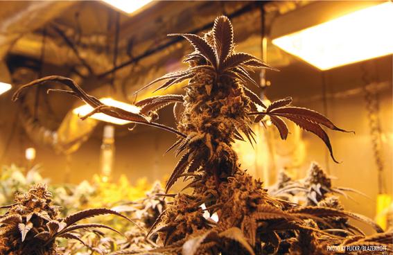 marihuana medicinal para ninos con autismo 1