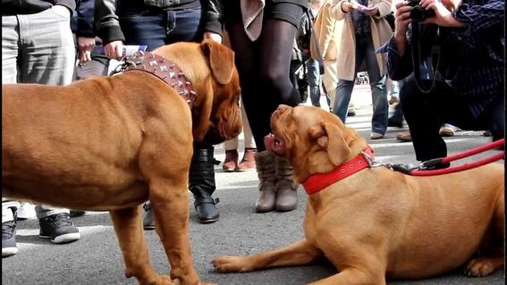 mujer pierde piernas por ataque de dos perros 2