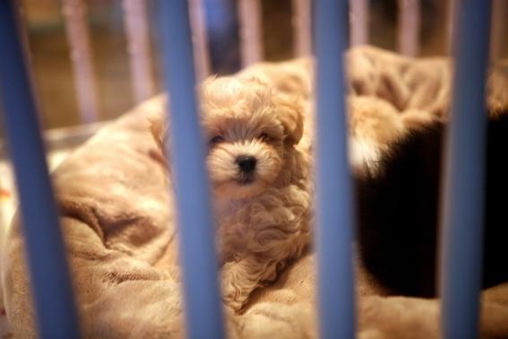 prohibir la vente de mascotas en mexico 2