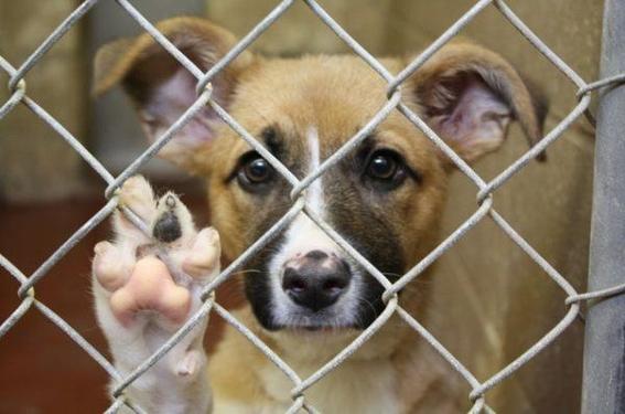 prohibir la vente de mascotas en mexico 4