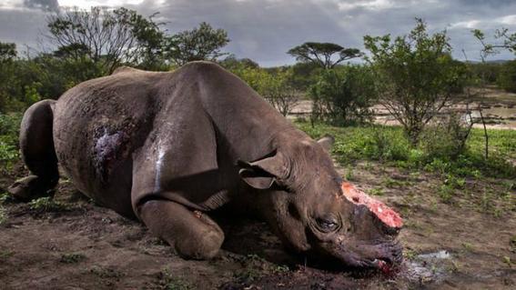por que nos impactan las fotos de maltrato animal 1