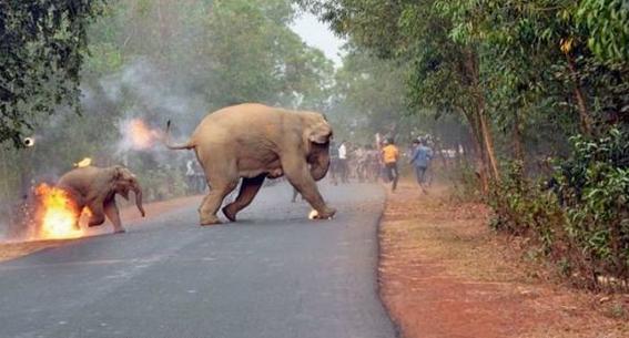 por que nos impactan las fotos de maltrato animal 2