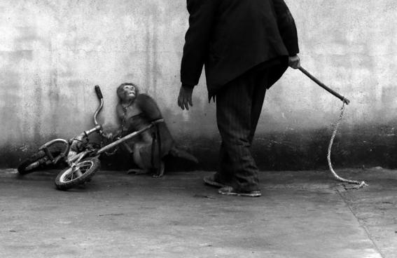 por que nos impactan las fotos de maltrato animal 3
