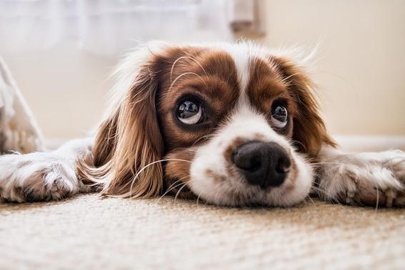 po rque humanos preferimos a los perros 2