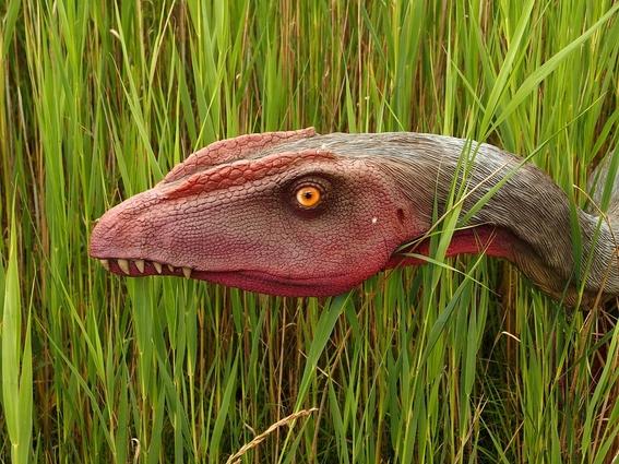 si el meteorito no hubiera caido en yucatan aun habria dinosaurios 5