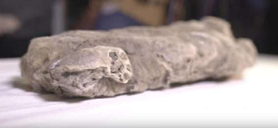 encuentran cachorro de leon prehistorico en siberia 1