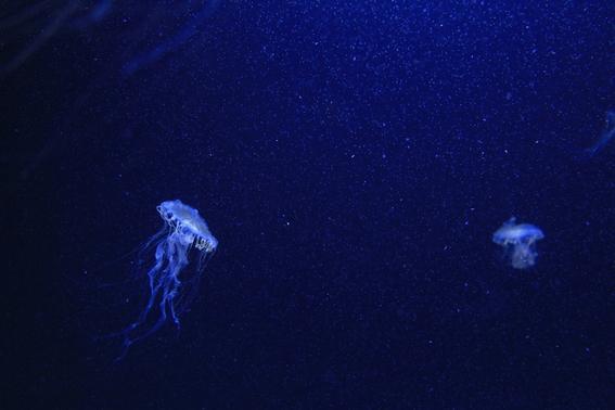 history of deep sea exploration 2