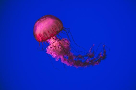 history of deep sea exploration 6