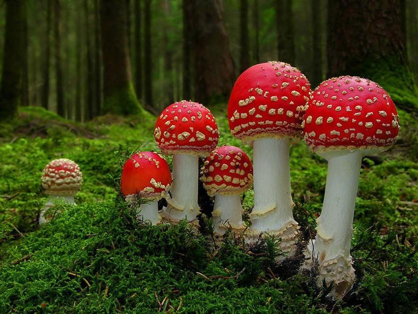 Lugares para probar hongos alucinógenos 1