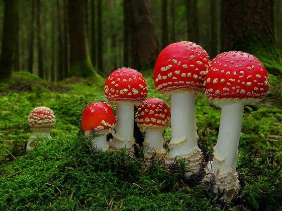 lugares para probar hongos alucinogenos 4