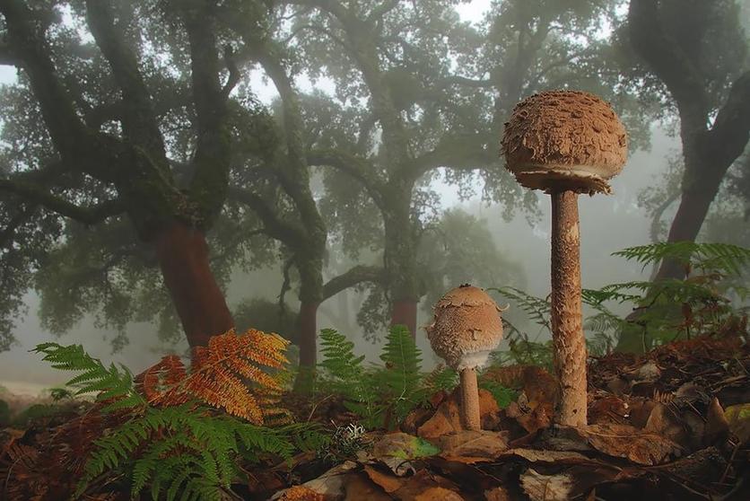 Lugares para probar hongos alucinógenos 0