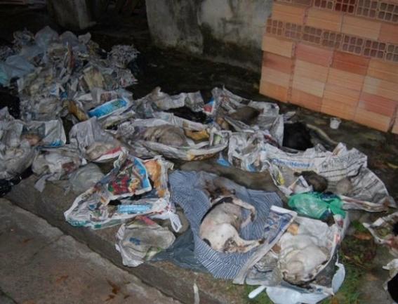 penas en brasil por maltrato animal 1