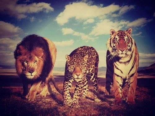 la muerte en el reino animal 2