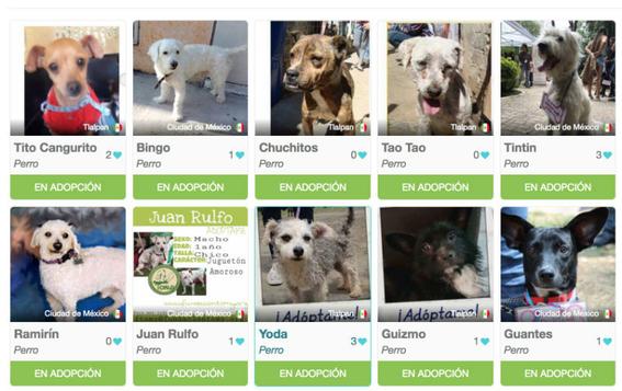 miwuki aplicacion para adoptar mascotas 6