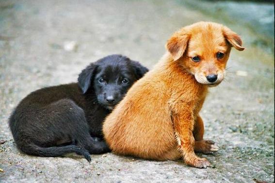 miwuki aplicacion para adoptar mascotas 2