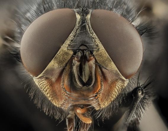 moscas alojan miles de bacterias 1