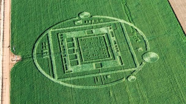 El secreto detrás de los misteriosos círculos hechos por extraterrestres 0