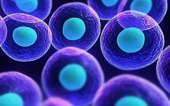 celulas madre en los dientes de leche 1