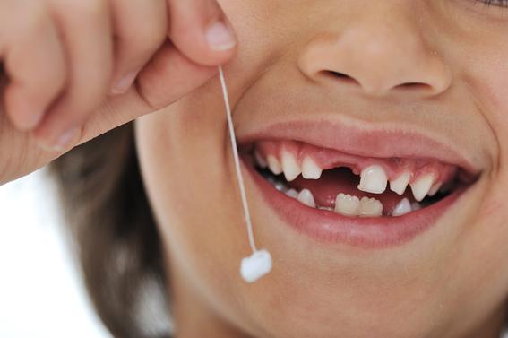 celulas madre en los dientes de leche 3