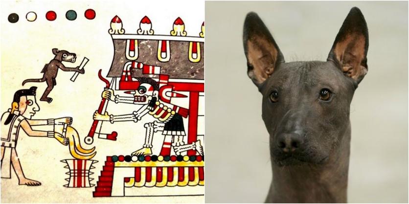 El misterioso significado del jaguar y otros animales en el México prehispánico 3