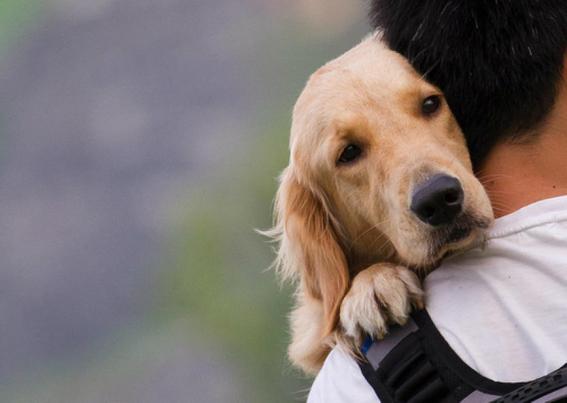 los perros no aman a los humanos 2