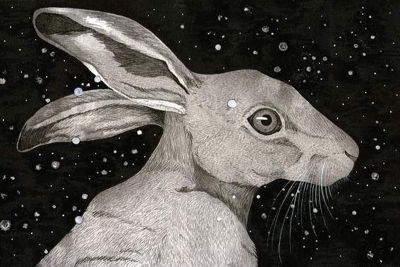 ilustraciones de sharon barcs 3