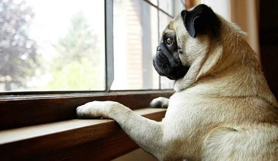 mascotas padecen estres si son tratadas como humanos 2