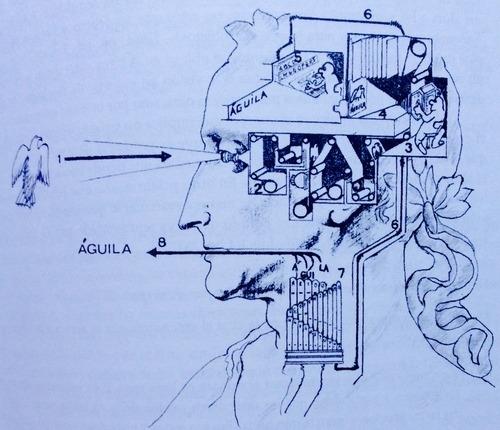 cerebro humano puede predecir el futuro 2