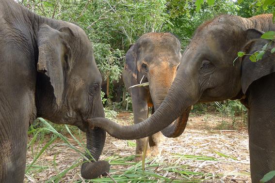 como viajar a tailandia 4