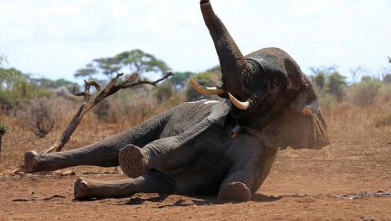caza de animales una solucion a la conservacion 1