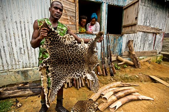 caza de animales una solucion a la conservacion 2