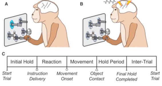 cientificos logran inyectar informacion en el cerebro de un mono 2