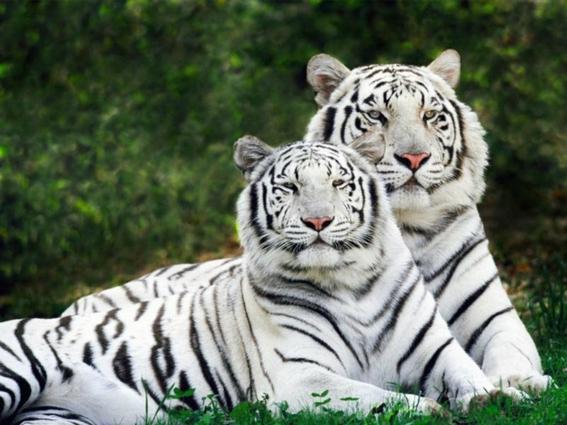extincion de animales importa mas que cambio climatico 1