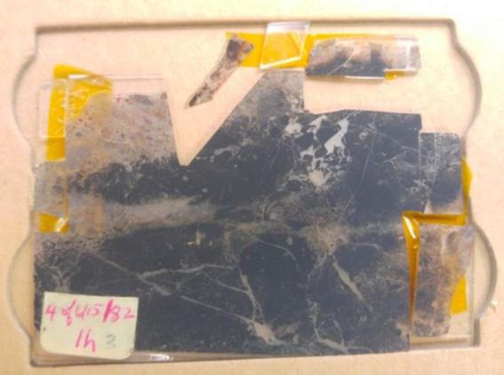 descubren fosiles mas antiguos de la tierra 1