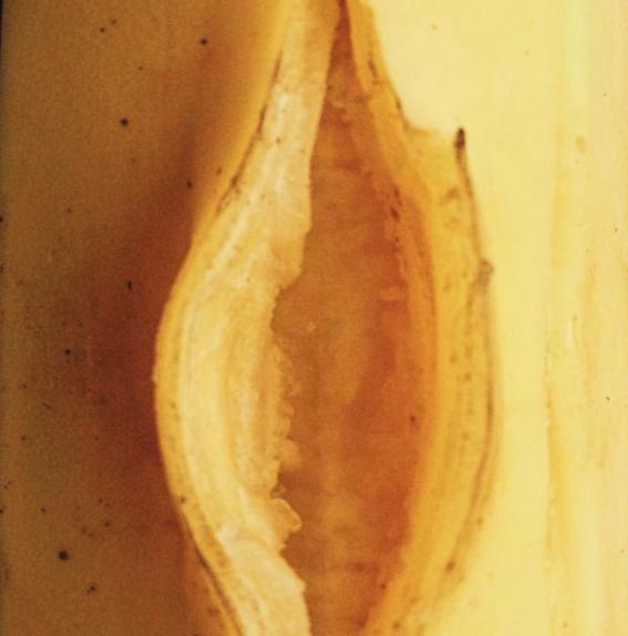 mitos sobre la vagina 6