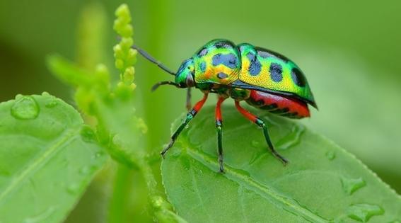 insectos enganan a aves para no ser comidos 1
