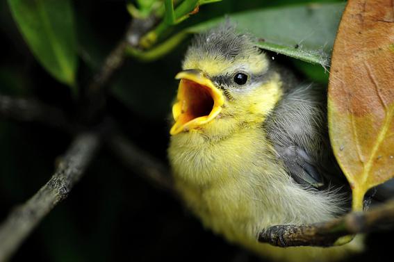 insectos enganan a aves para no ser comidos 3