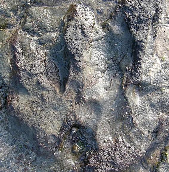 vandalos destruyen huella de dinosaurio 1