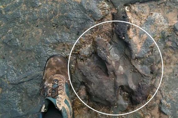 vandalos destruyen huella de dinosaurio 2
