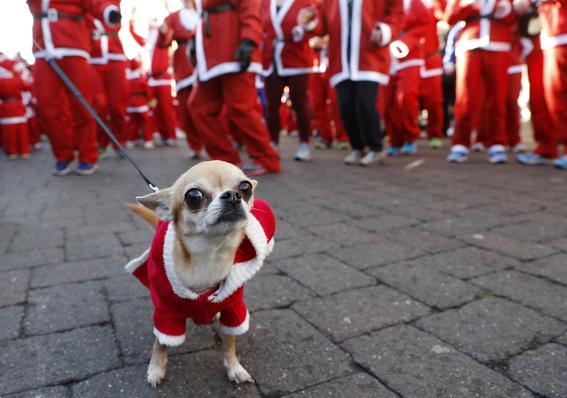 es malo comprar mascotas en navidad segun veterinario de la unam 1